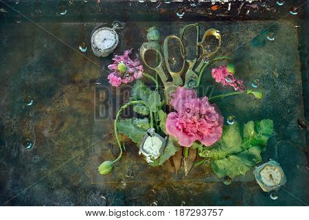 Art still life with two pairs of scissors lying next to surrounded by pink flowers of mountain poppies on the glasses among the water a possible photo for the original interior.