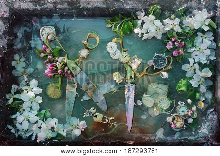 Art still life with two pairs of bright shiny metal scissors old wrinkled flowers among spring white flowers of apple trees in water original design for interior decoration.