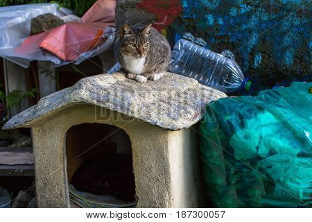 Cat sits on dog house, trash in bags.