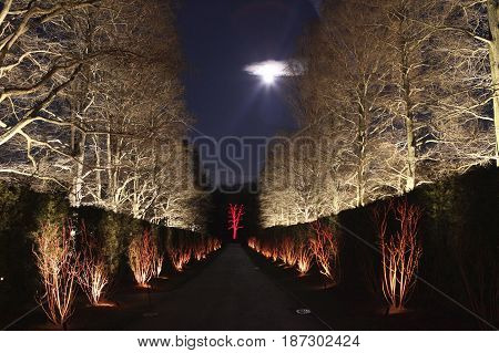 A walkway accompanied by some trees, lit up with bright, white lights on an autumn evening.