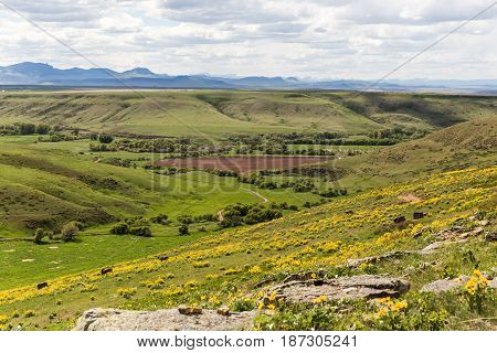 Spring Landscape In Montana