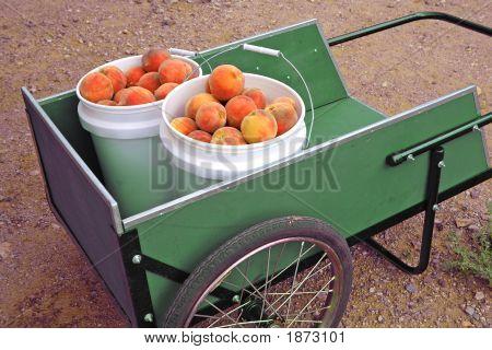 Fresh Peaches In A Wagon