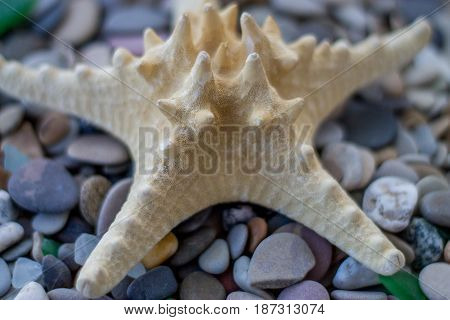 Sea pebbles with starfish. Stone background. Close-up.