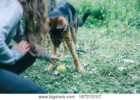 German shepherd dog. Puppy. Girl and german shepherd dog
