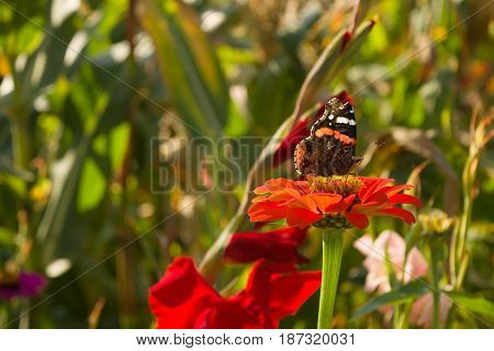 Beautiful butterfly and a flower are friends