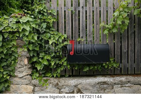 Single black mailbox sits on of a wooden fence. grape leaves or vine.
