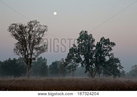 Forest at sunrise on a misty morning, Kanha National Park, India