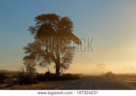 Sunrise with silhouetted tree and dust, Kalahari desert, South Africa