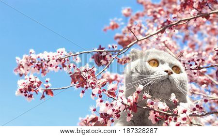 Cute cat with blossoming branch on blue sky background