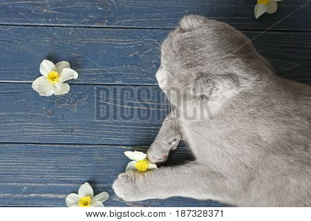 Cute cat with flowers lying on wooden floor