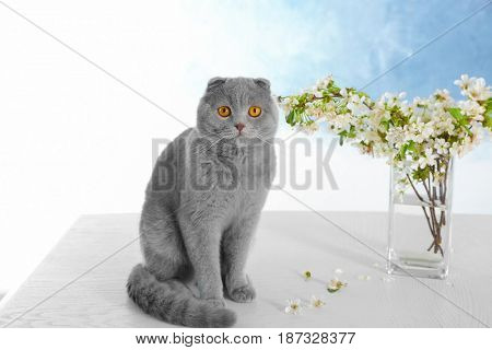 Cute cat with blossoming branches on table