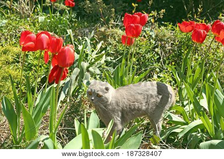 Cute cat with tulip flowers outside