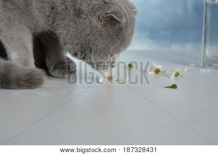 Cute cat smelling blossoming flower on table