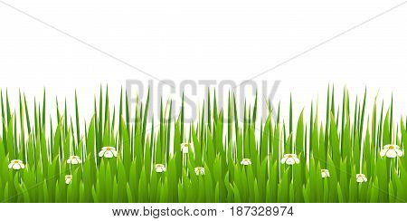 Green grass with blooming chamomiles isolated on white background. Nature. Spring. Vector illustration.
