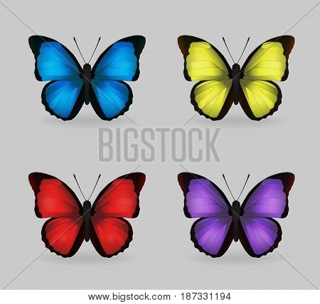 A collection of vibrant multy color insect blue morpho butterflies. Realistic close-up look, delicate wing pattern, 4 colour variations.
