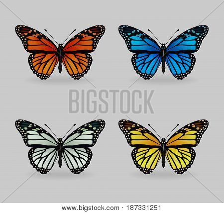 A collection of vibrant multy color insect monarch tiger butterflies. Realistic close-up look, delicate wing pattern, 4 colour variations.