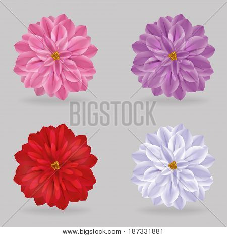 A collection of vibrant multi color lovely chrysanthemum daisy flowers. Realistic close-up look, detailed petals, 4 colour variations.