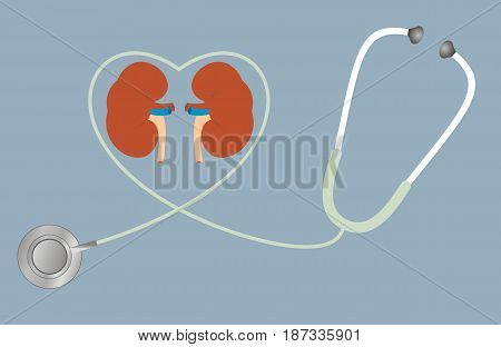 A concept for healthy kidneys. stethoscope in shape of heart. Vector