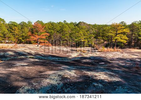 Landscape with trees and stone ground in the Stone Mountain Park in sunny autumn day Georgia USA