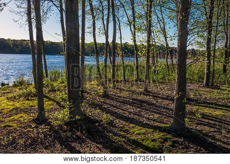 A sunny late afternoon along Lake Maguerite in Helmetta New Jersey.