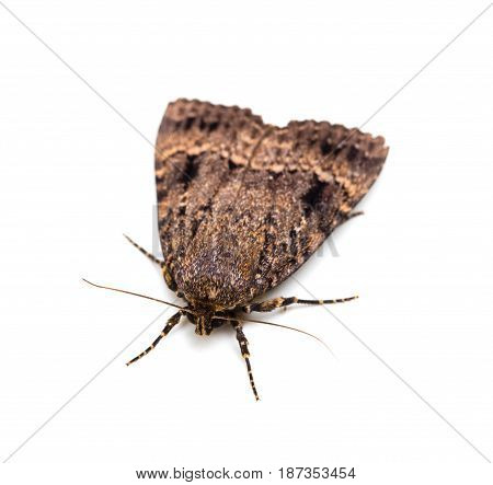 Moth butterfly. Macro. Isolated on a white background.