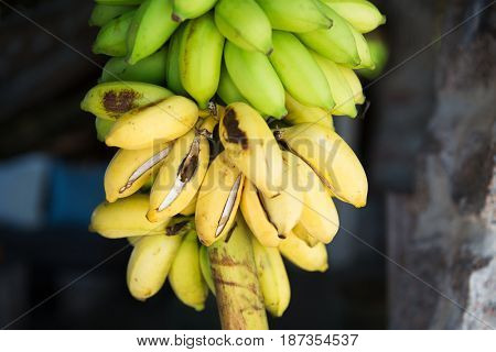 fruit, sale and food concept - bunch of green bananas at street market