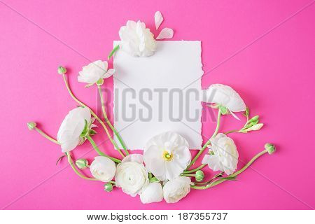 Background of ranunculus. Floral pattern of white flowers and white card on pink background. Flat lay, top view.