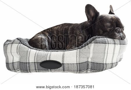 French bulldog sleep in bed on white isolated background