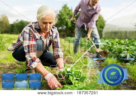organic farming, agriculture and people concept - happy senior couple working in garden at summer farm