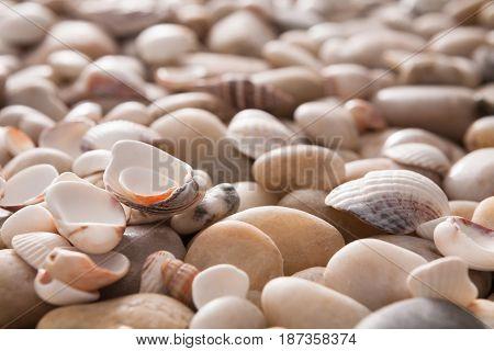 Sea pebbles and seashells background. Natural seashore stones textured surface