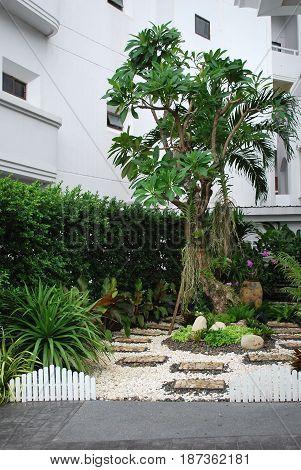 PATTAYA, THAILAND - OCTOBER 08, 2015:  A tree in a small landscape designed garden at D Varee resort in Pattaya Thailand