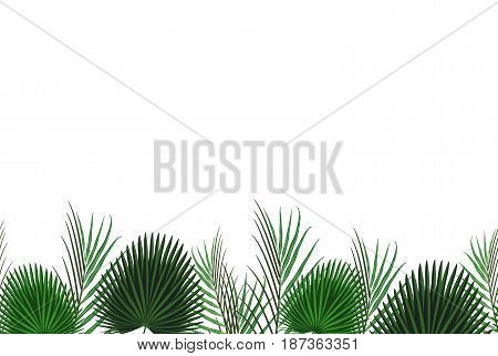 Tropical Design With Exotic Palm Leaves.