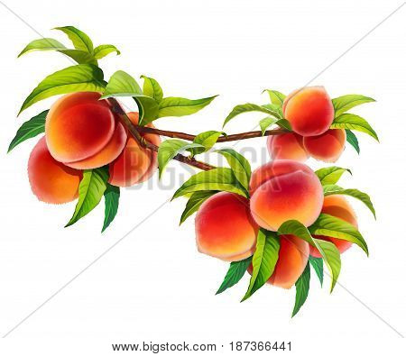 Peaches on a branch with leaves, png without background