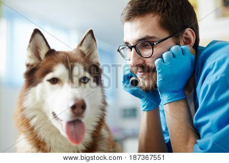 Vet doctor looking at one of his patients