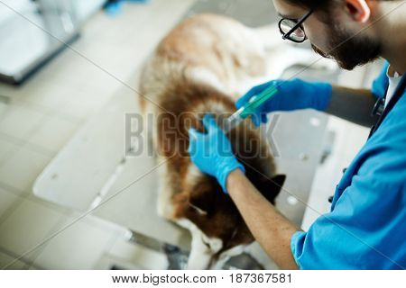 Vet doctor with syringe vaccinating ill patient