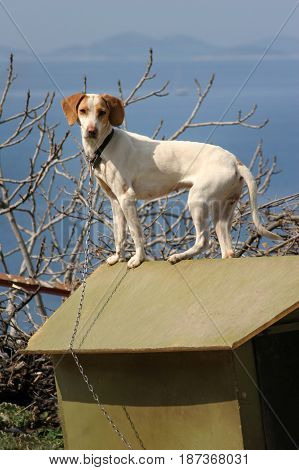 White dog with brown ears on the roof of the green doghouse