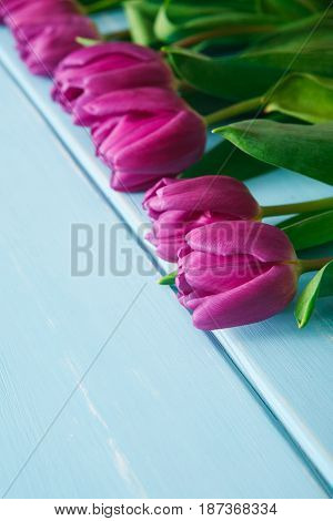 Violet tulips on blue wood with copy space. Beautiful flowers background. Bouquet on table, mockup for greeting card