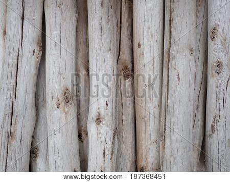 Wood log background textured. Wood log background textured.
