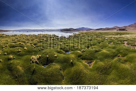 pamorama of mountain lake laguna rossa with green grass on shore surrounded by high peaks in atacama desert in Chile with blue sky