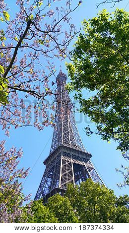 Eiffel Tower on blue sky background with beautiful blooming trees. Spring in Paris France.
