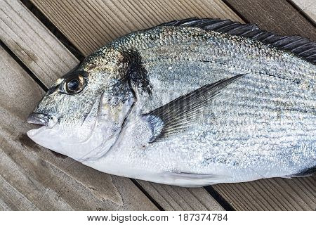 Closeup shot of fresh dorade royal fish on wooden background