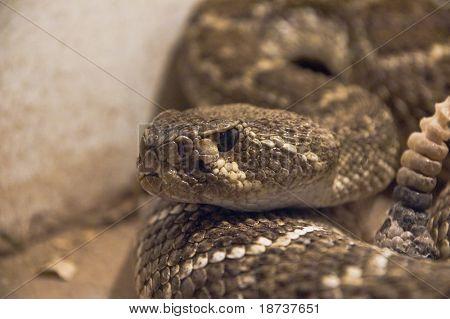 snake in terrarium