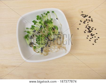 Basil sprouts or basil cress seedlings in bowl
