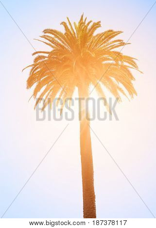 Tropical palm tree against the sun and sky