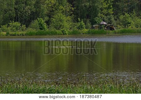 The photo shows a lake. The shores of the lake are covered by a mixed forest. On the distant shore you can see the tents spread out. It's sunny weather.