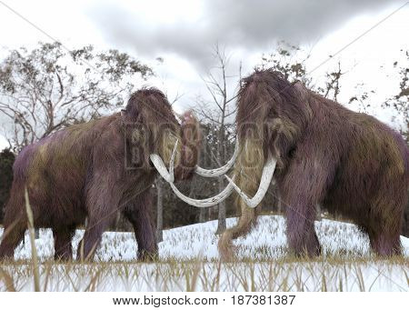 A 3-D illustration of two Woolly Mammoths grazing in a snow-covered grassy field in a hypothetical scenario.