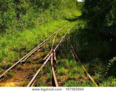 Pelgorskoye narrow gauge railway. Pelgorskoye, Leningrad region