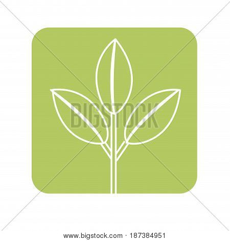 label nice ecology plant with leaves, vector illustration design