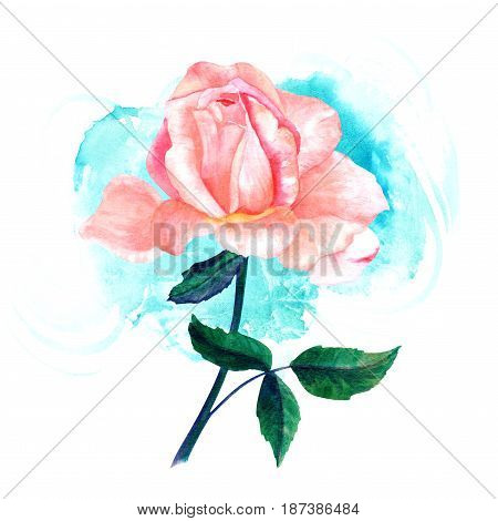Watercolor drawing of tender pink rose flower, hand painted in style of vintage botanical art, on turquoise blue brush stroke texture. Decorative element for greeting card or wedding invitation