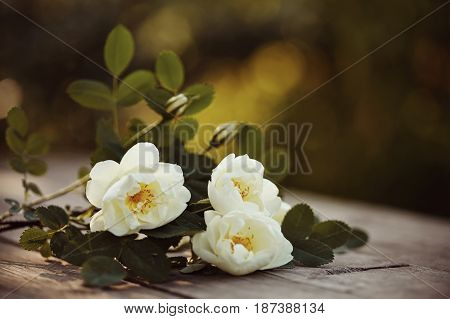 Bouquet of a white dogrose on a wooden table.